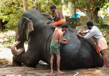Malayalam Short Story - Three Blind Men describe an Elephant by E. Santosh Kumar